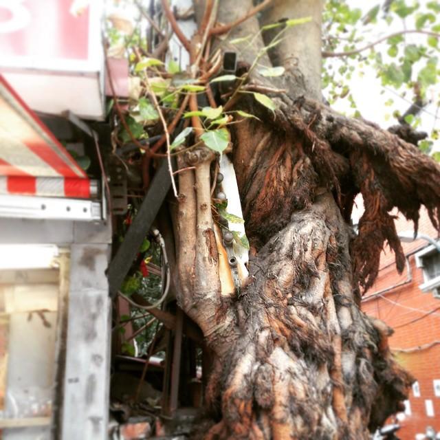 This tree has grown around a neon sign. #Taiwan #Taipei…
