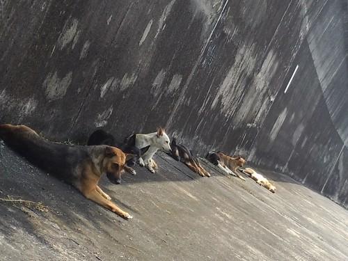 Straßenhunde Taiwan