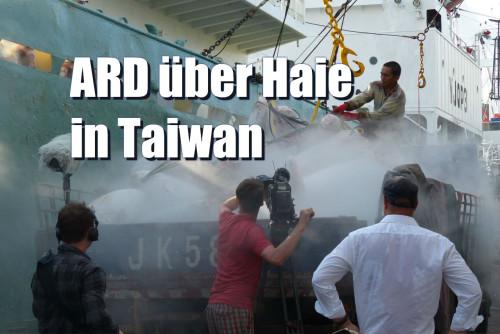 ARD Weltspiegel Haie Taiwan