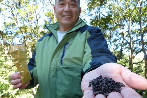 Teeanbau Teeblätter