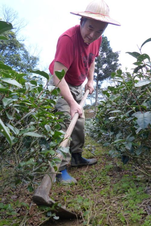 Teebauer Teeplantage Taiwan