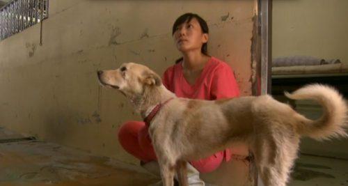 Tierärztin Chien mit Hund