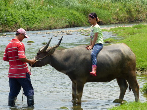 Kid Riding a Water Buffalo