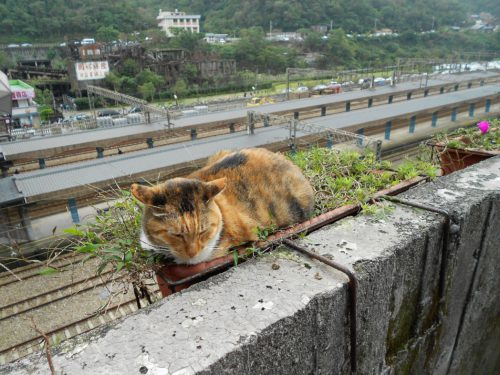 Katze in Houtong