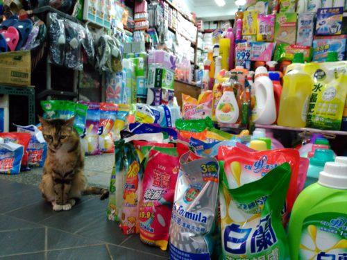 Katze in Taiwan